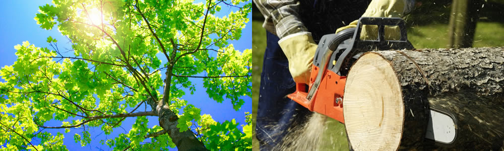 Tree Services Denham Springs